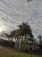 Algodones en el Cielo