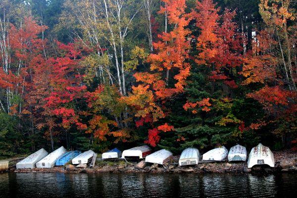 Algonquin Fall Morning