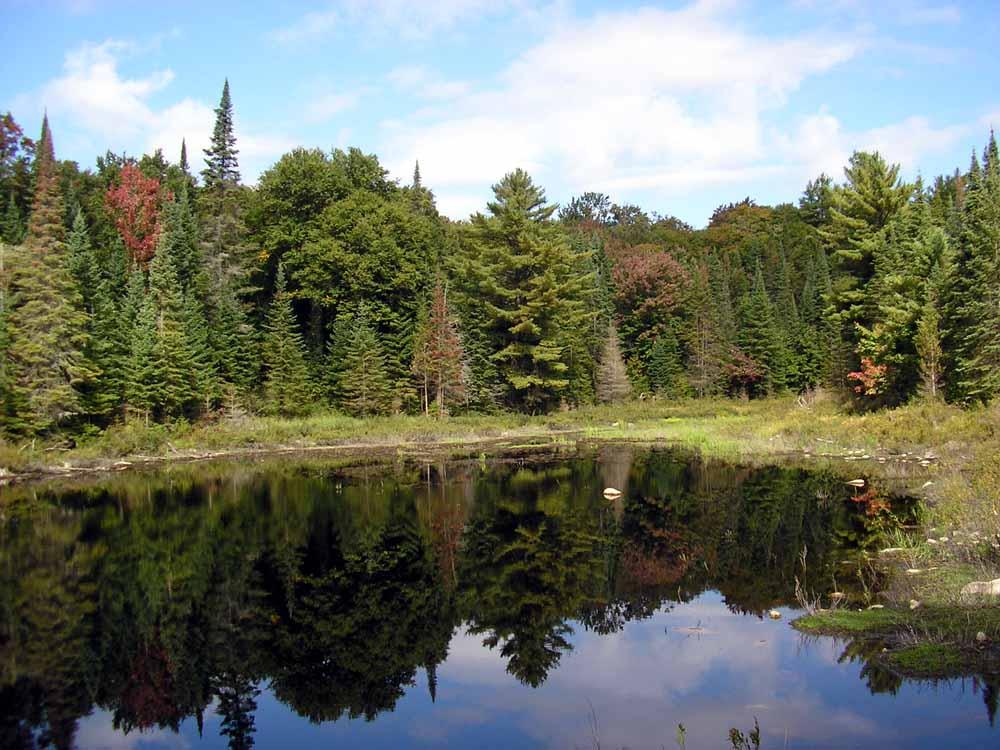 Algonquin National Park, Kanada
