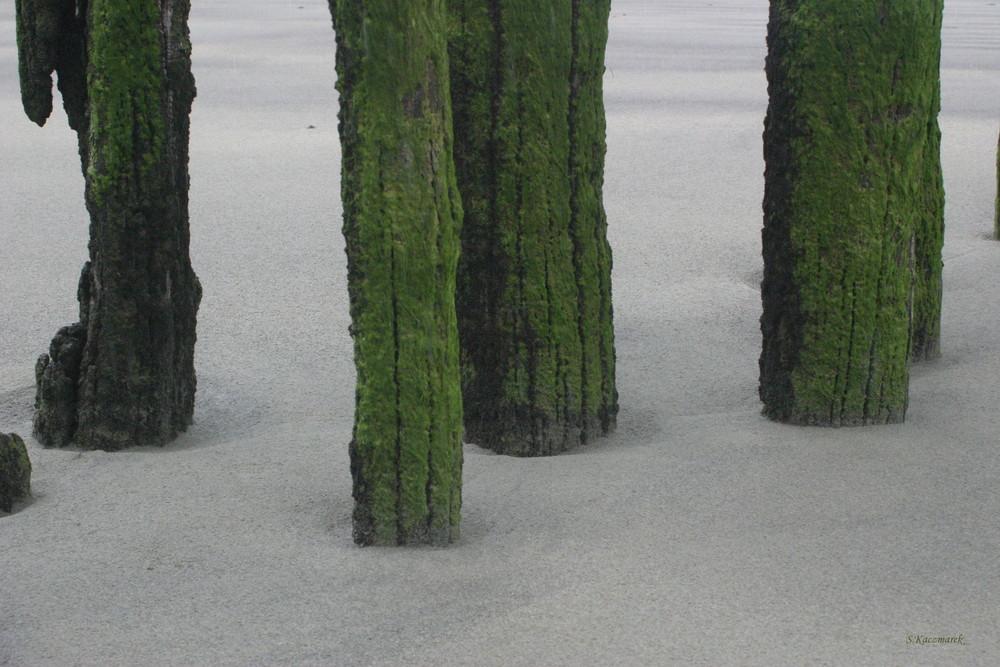 Algues sur Bois