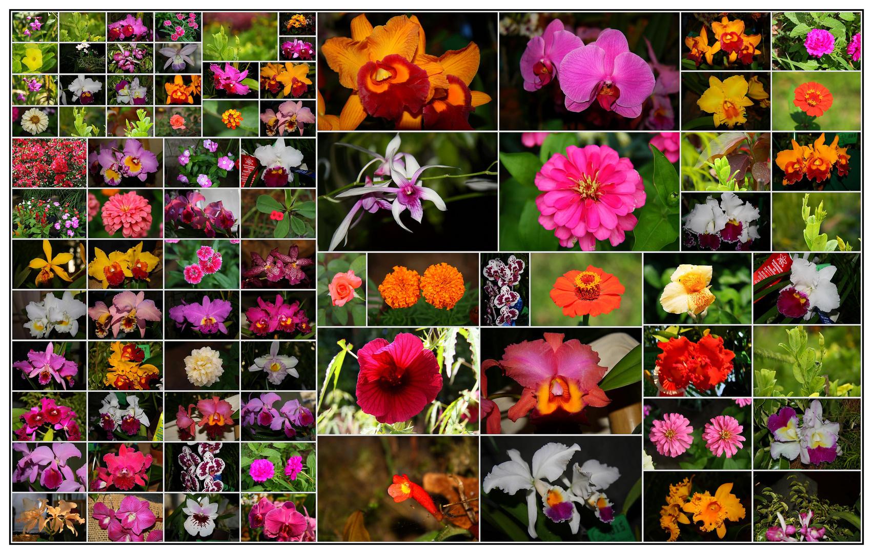 algunas flores de venezuela imagen foto plantas