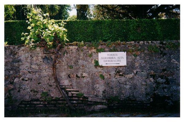 Alhambra - Weg zum Generalife (Granada)