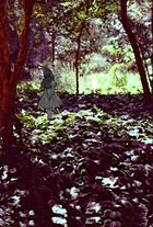 Alicia en el botánico