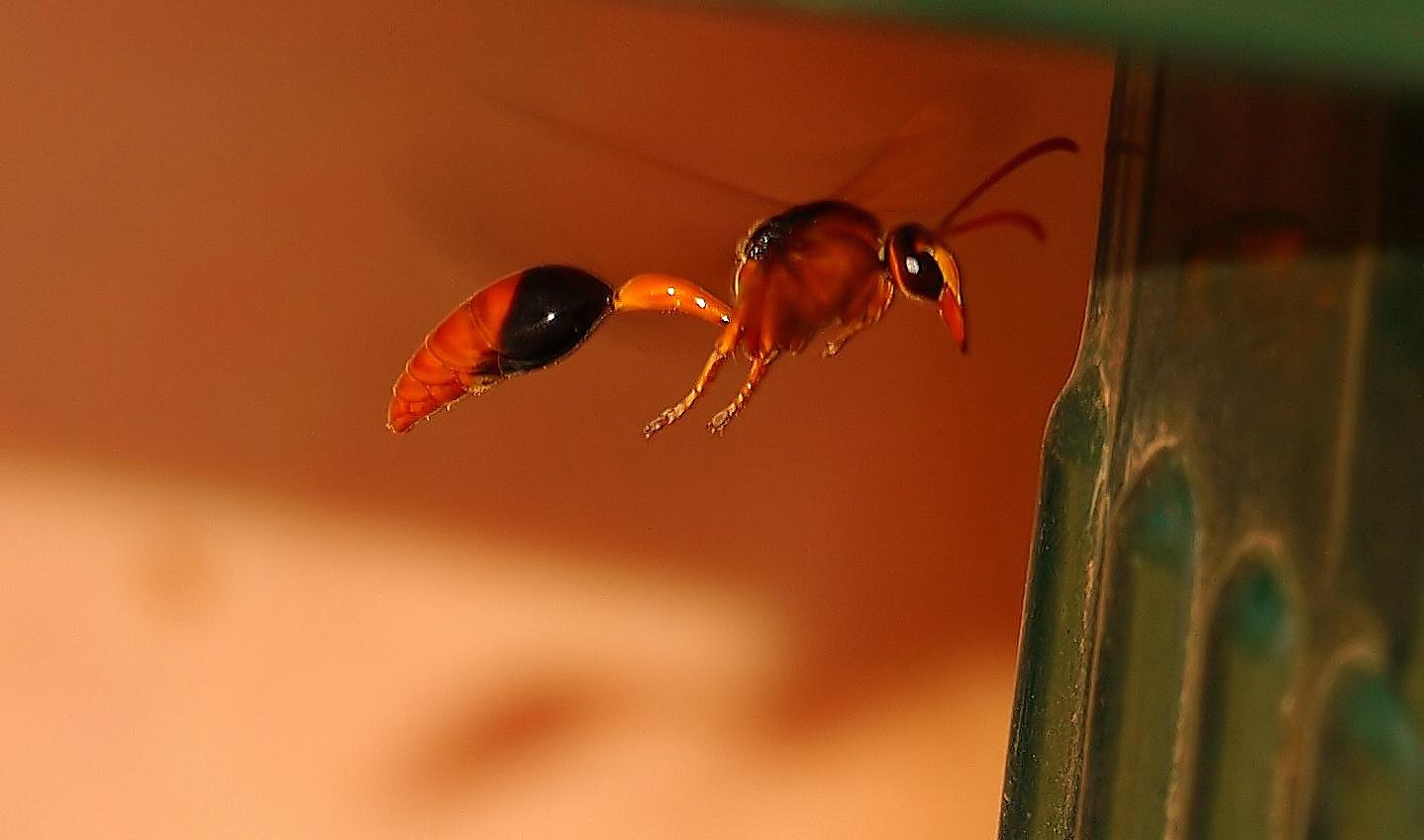 """""""Alien attack"""" am Mardugal Billabong, Kakadu Nationalpark"""