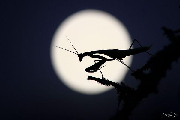 Alien au clair de lune