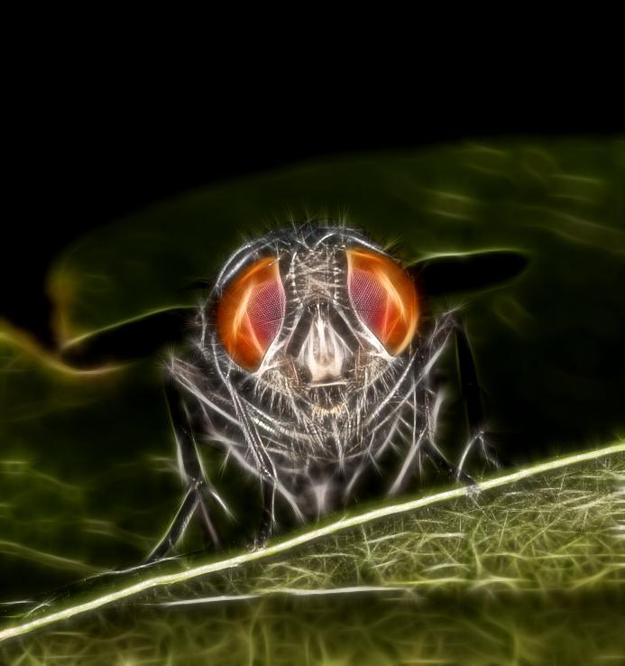 Alien-Fly...