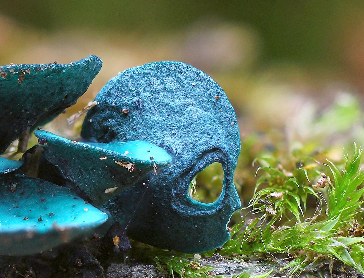 alien in blau.....