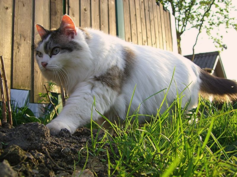 Alisa im Garten