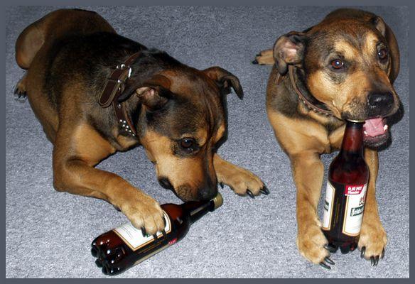 Alkoholsüchtiger Hund?