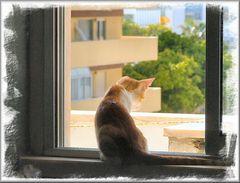 Alla finestra in controluce.