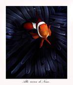 Alla ricerca di Nemo..