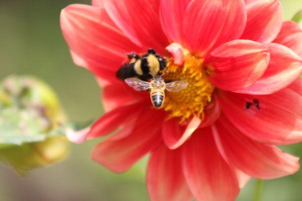 alla ricerca di un fiore
