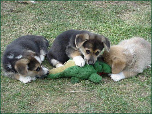 alle lieben Schnappi das Krokodil....