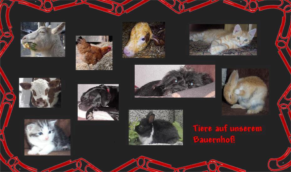 Alle meine Tiere...