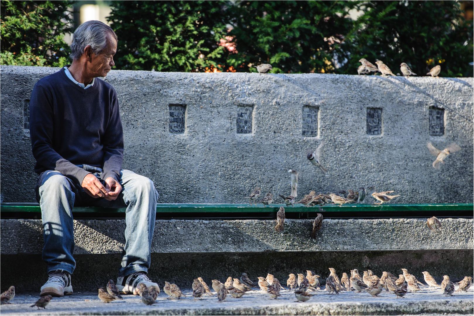 Alle meine Vögel (2)
