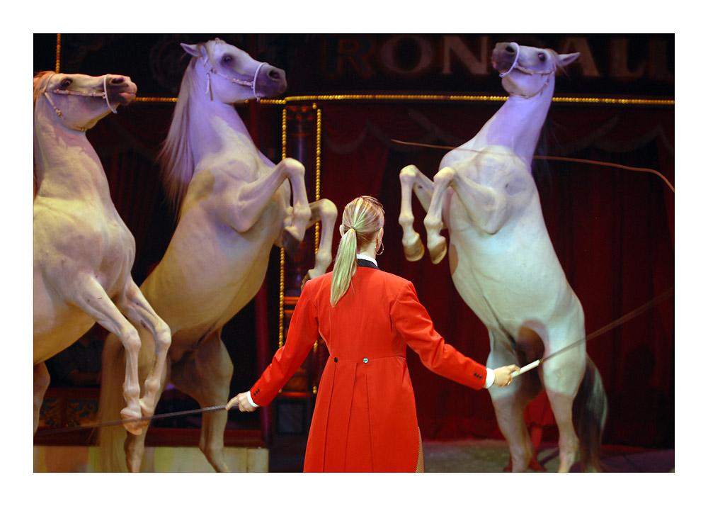 Alle Pferde fliegen hooooch ....