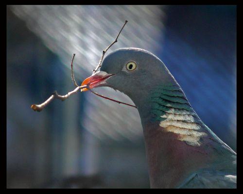 Alle Tiere können hören, auch die Tauben