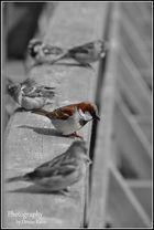 alle Vögelchen