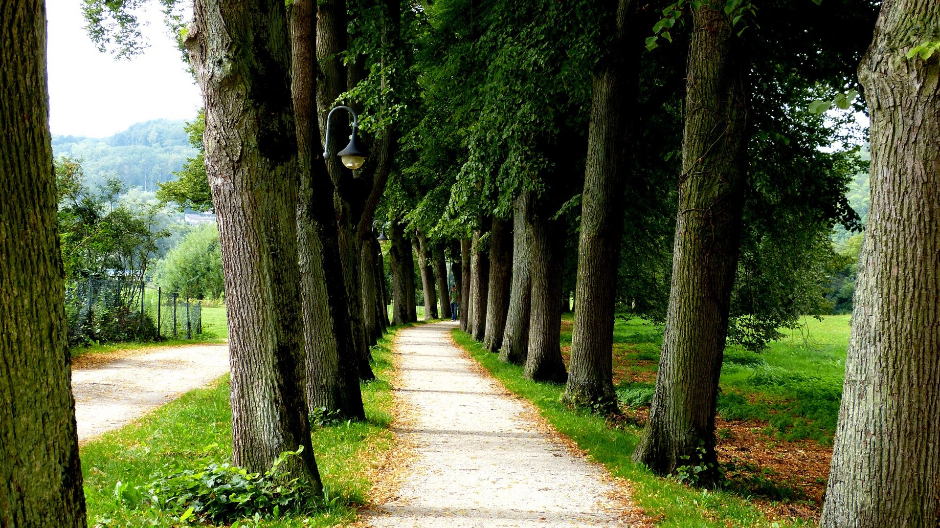 Allee 2