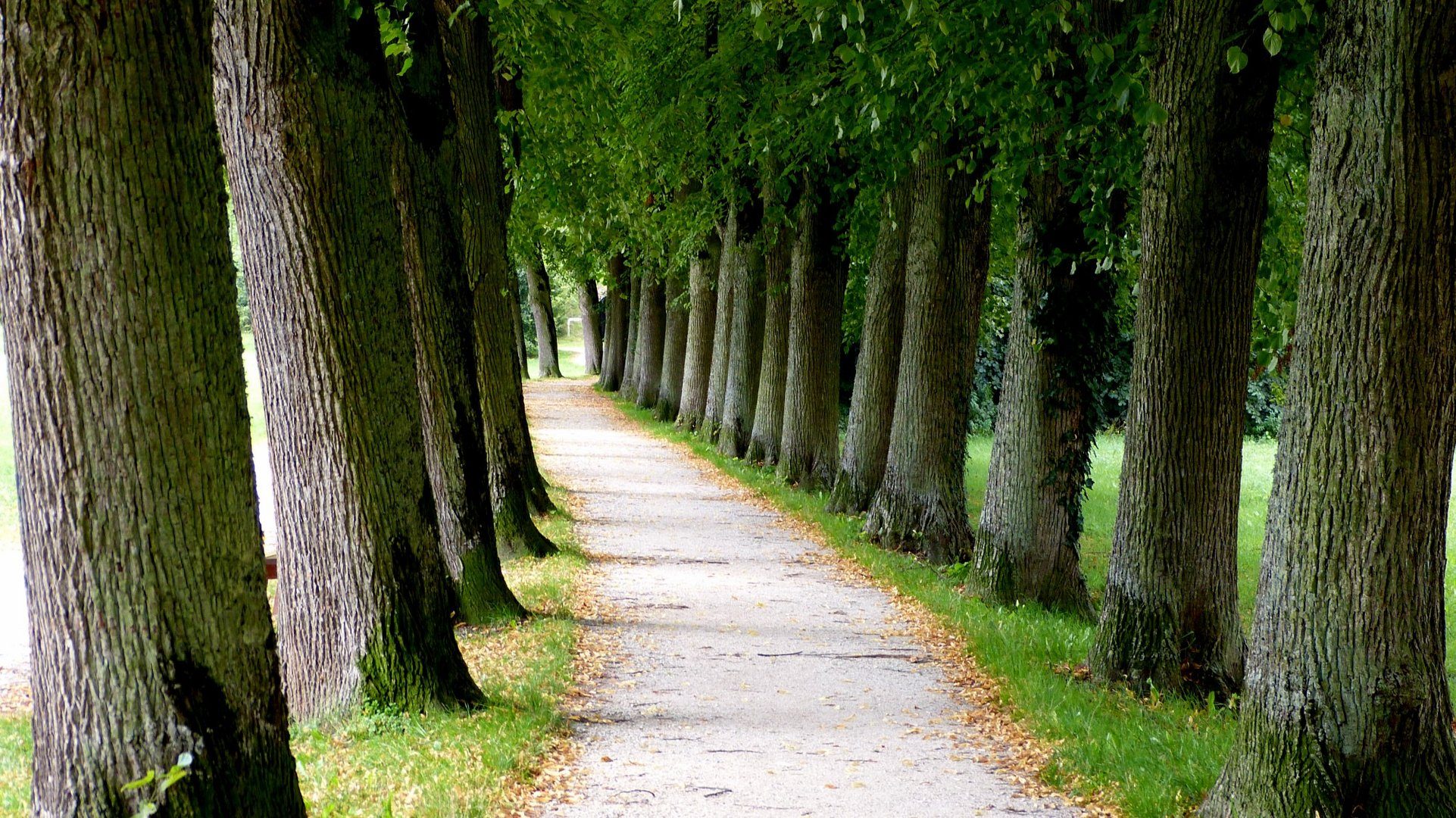 Allee 3