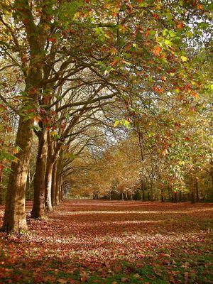 Allée aux couleurs d'automne