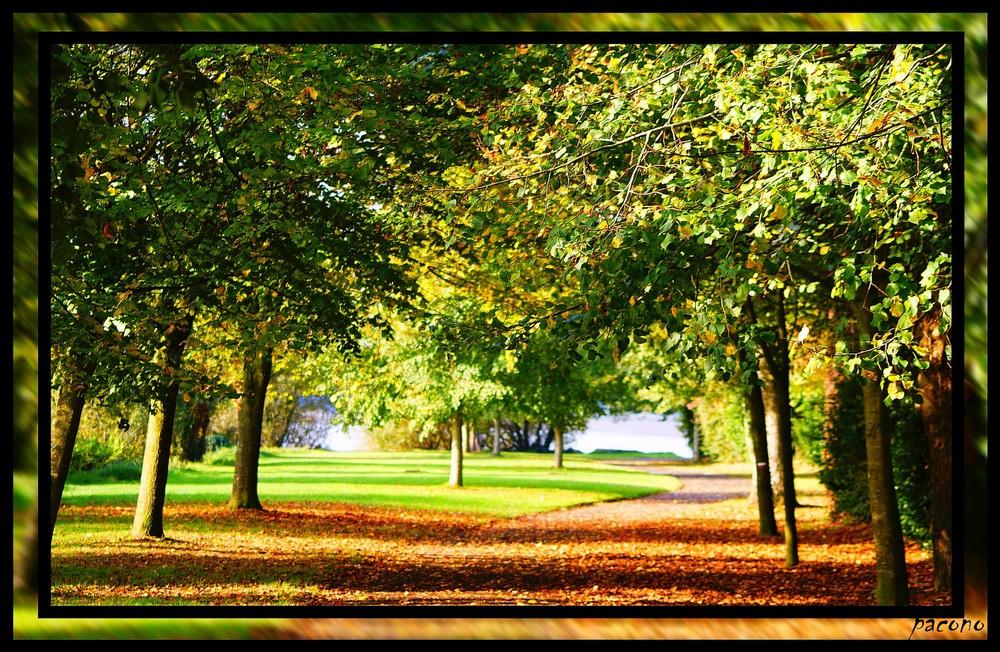 allée d'automne