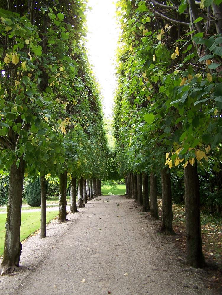 Allee der Bäume