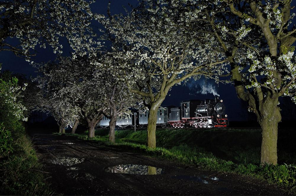 Allee der Kirschbäume
