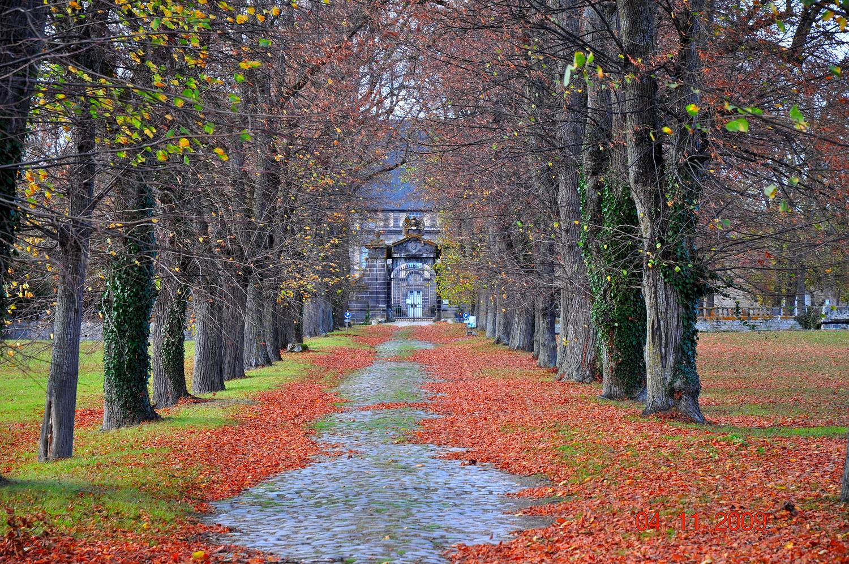 Allée en automne