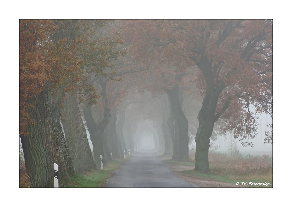 * Allee im Herbst *