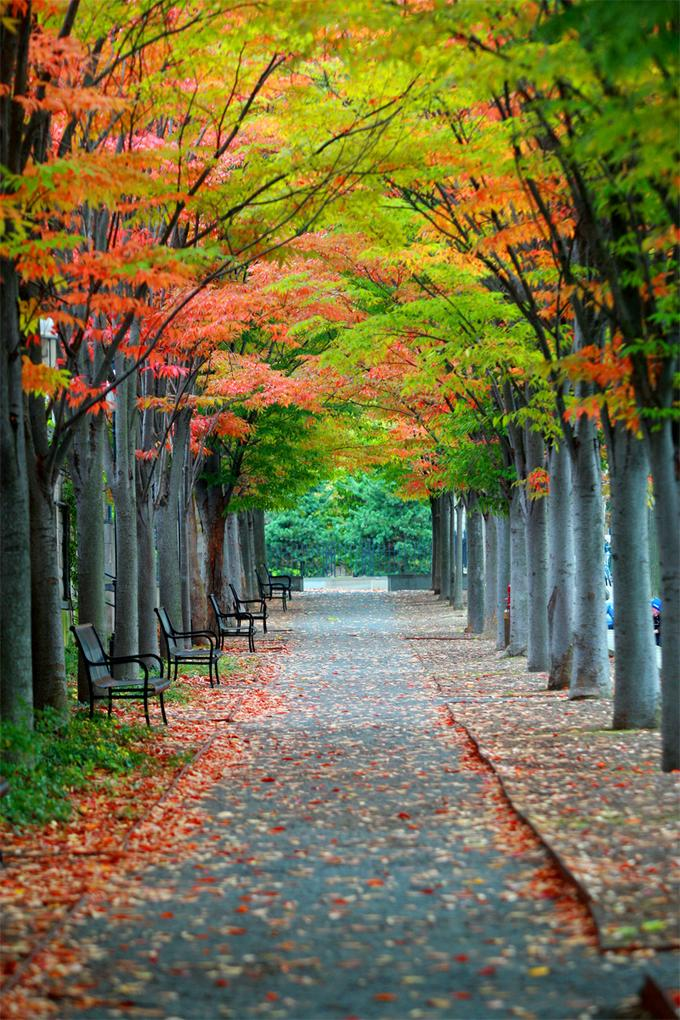 Allee im Herbst, Princeton, USA