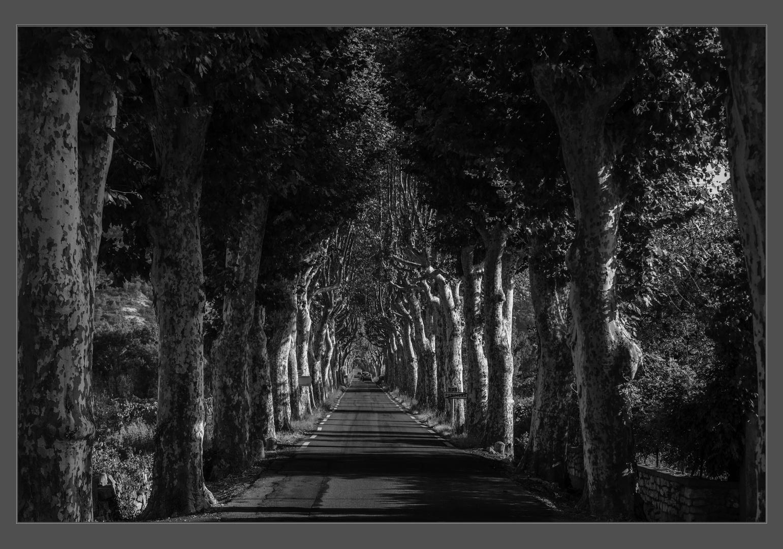 Allée im Languedoc