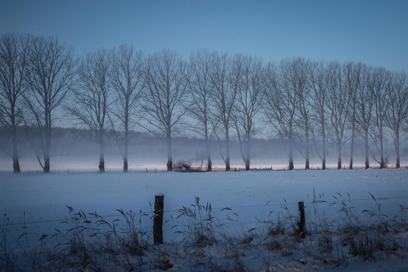 Allee im Nebel