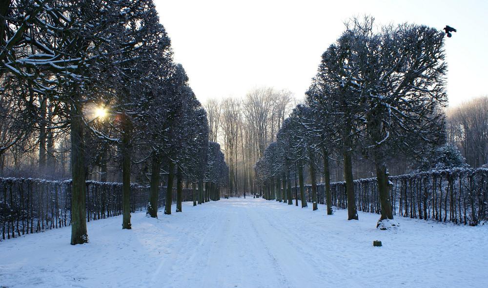 Allee im Schlosspark in Brühl