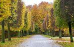Allee im Schlosspark von Brühl