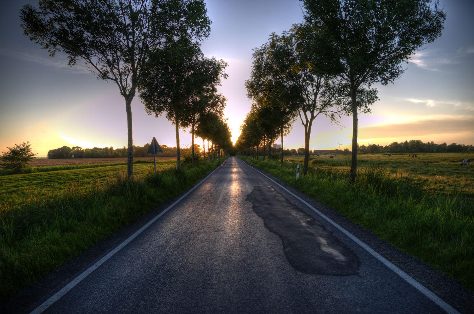 Allee im Sonnenuntergang