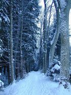 Allee im Wald