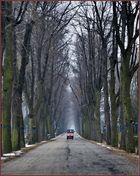 Allee im Wiener Zentralfriedhof