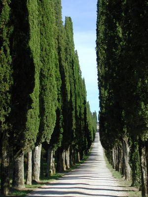 Allee in der Toscana