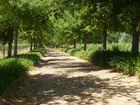 Allee in der Weinregion - Nähe Stellenbosch