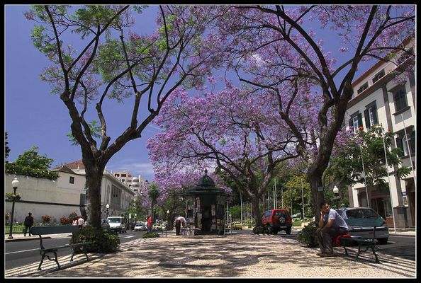 Allee in Funchal, Madeira