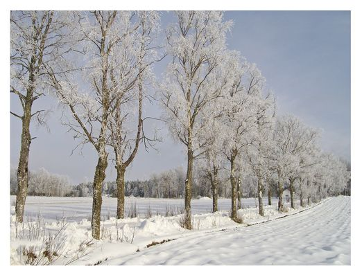Allee in Weiss