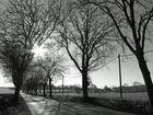 Alleestraße im Morgenlicht