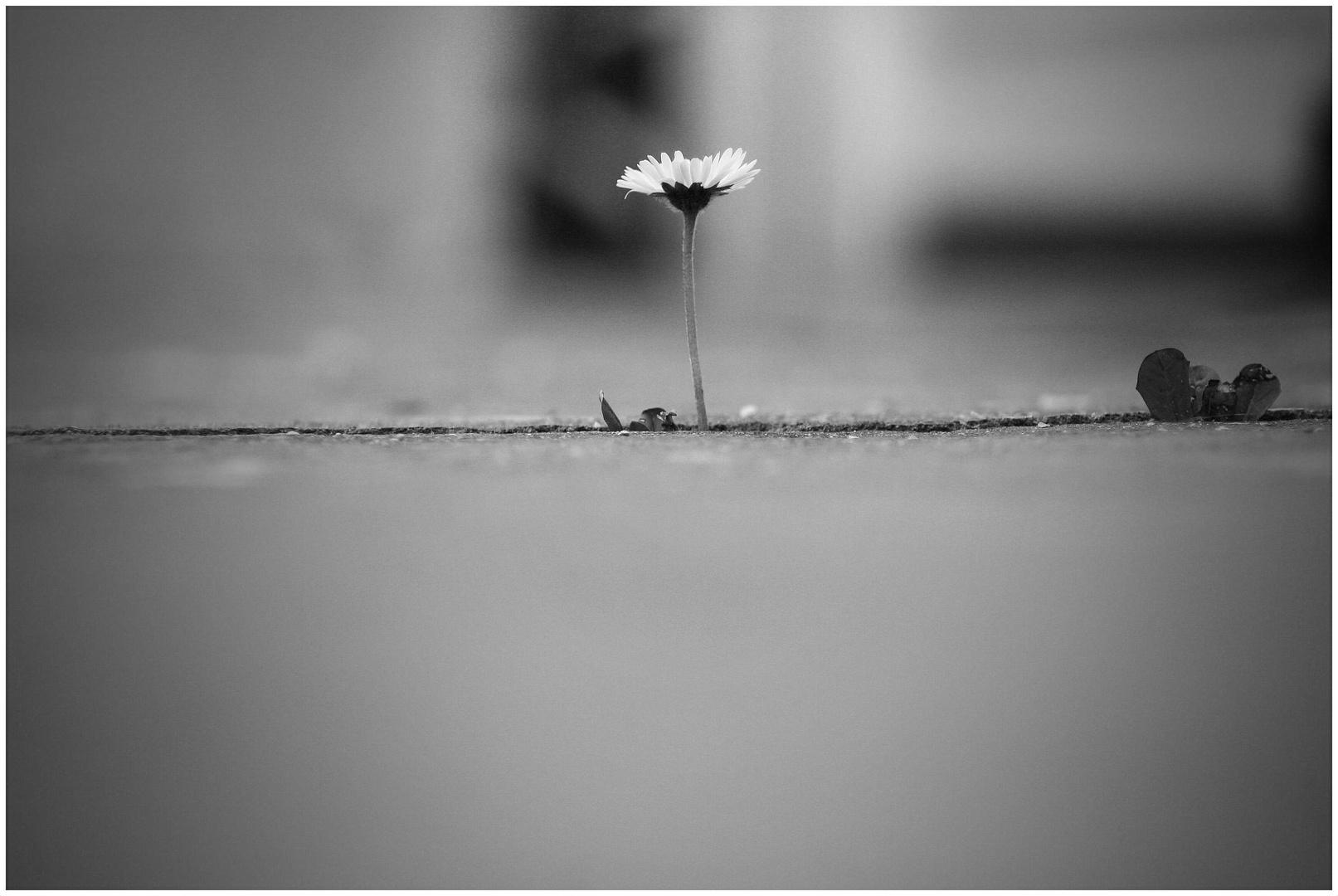 allein allein ...