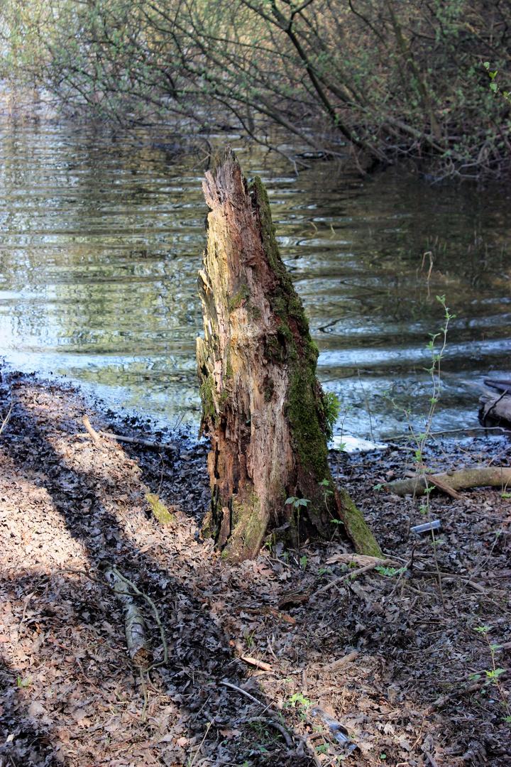 allein am Ufer