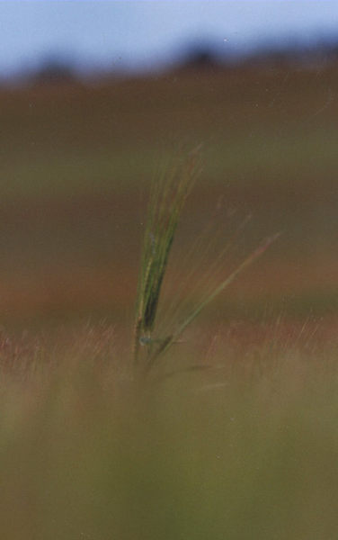 Allein... ganz allein... im Feld.