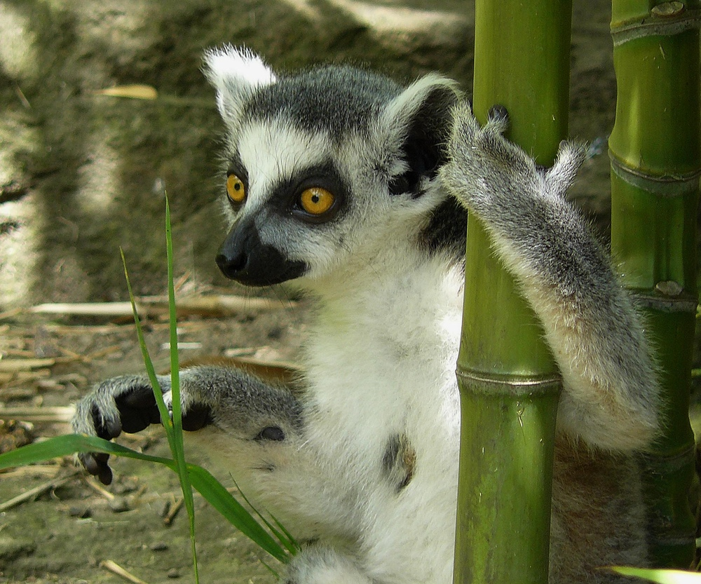 Allein im Bambuswald