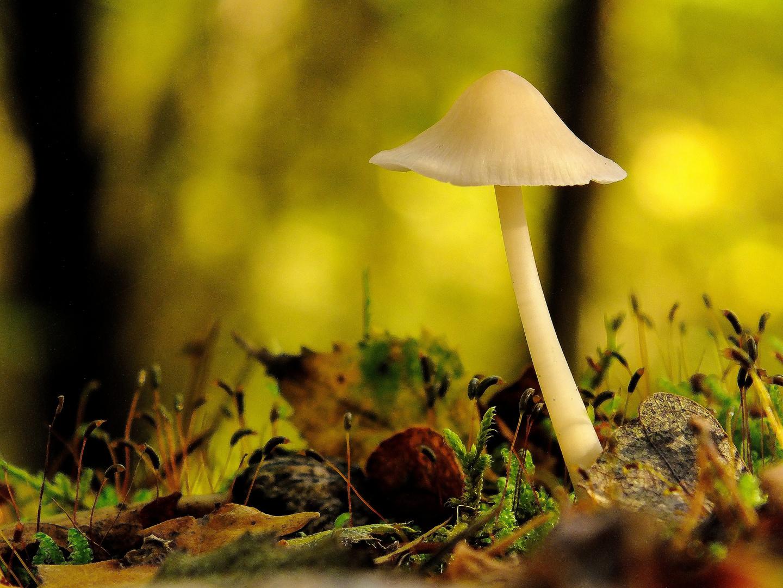 *Allein im herbstlichen Wald*