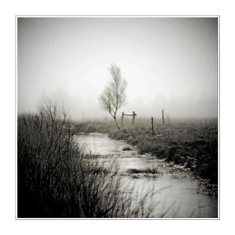 Allein im Moor