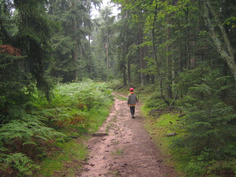 Allein im Schwarzwald